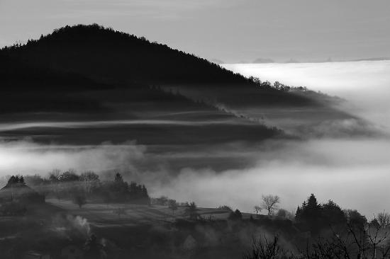 noir-et-blanc-foret.jpg