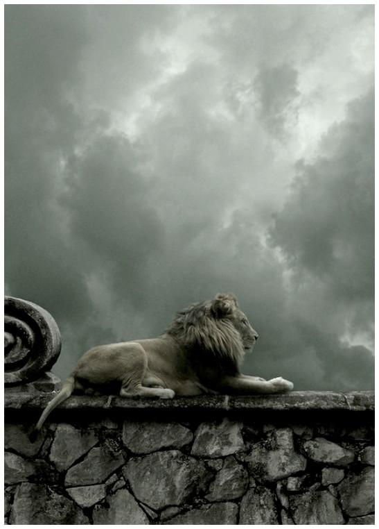 Terra ignota ubi sunt leones 2